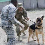 Taking a bite out of terror: TF Duke canines bring skills to the fight
