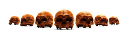 A line of edible skulls